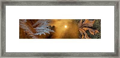 Cold Feet Leaves Framed Print