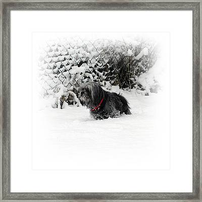 Cold Feet Framed Print by Sharon Lisa Clarke