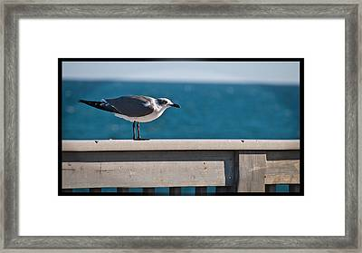 Cold Gull Framed Print