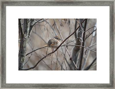 Cold Framed Print by James Petersen