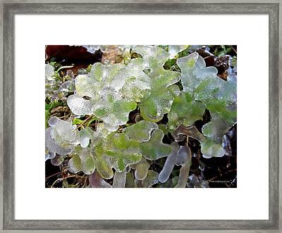 Cold Morning  Framed Print