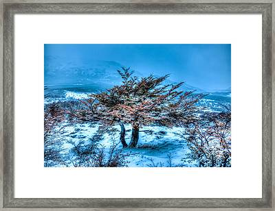 Cold Morning Framed Print by Roman St