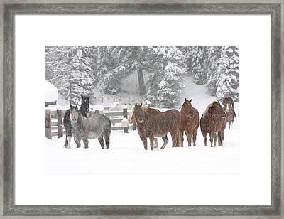 Cold Ponnies Framed Print