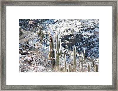 Cold Saguaros Framed Print