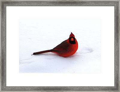 Framed Print featuring the photograph Cold Seat by Alyce Taylor