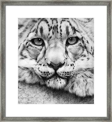 Cold Stare - Drawing Framed Print