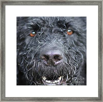 Cold Wet Nose Framed Print by Michelle Orai