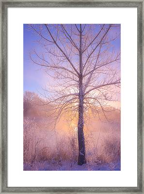 Cold Winter Morning Framed Print by Darren  White