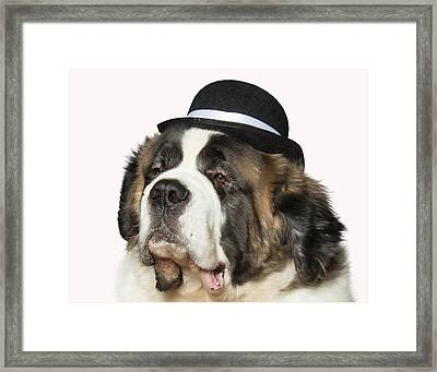 Cole The St Bernard Framed Print by Ron Roberts