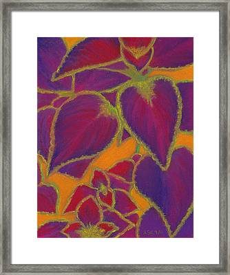 Coleus Gone Wild Framed Print