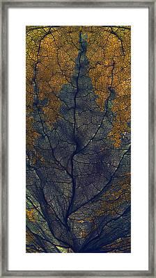 Coleus Window Framed Print by Julia McLemore