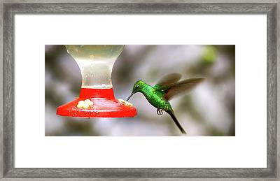 Colibri Hummingbird On Bird Feeder Framed Print by Panoramic Images