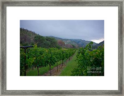 Colibri Vineyards Framed Print