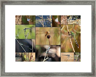 Collage Marsh Life Framed Print by Carol Groenen