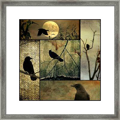 Collage Of Five Crows Framed Print