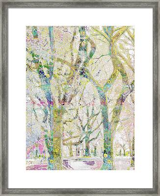Collage Of Trees Framed Print by Gabrielle Schertz
