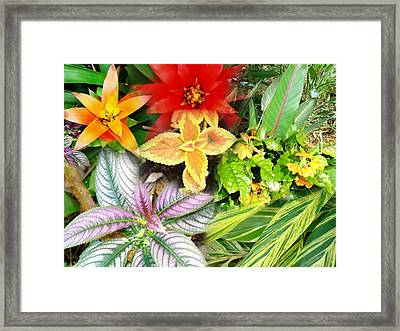 Collage Of Tropical Colors Framed Print by Van Ness