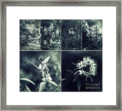 Yukon Wild Flower Collage Framed Print by Priska Wettstein