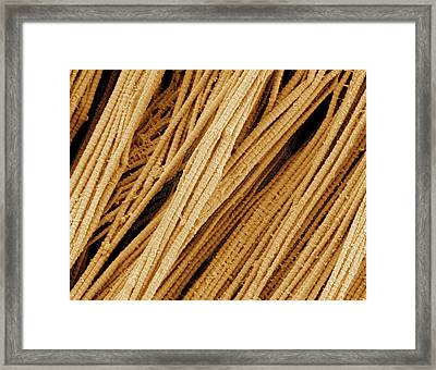 Collagen Fibrils Framed Print by Thomas Deerinck, Ncmir