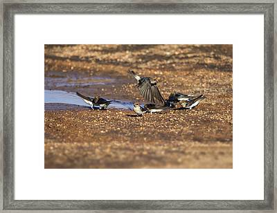 Collecting Mud Framed Print