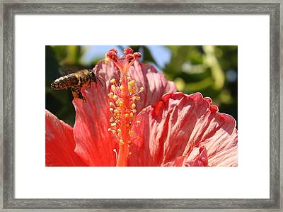 Collecting Pollen Framed Print by Bruce Bley