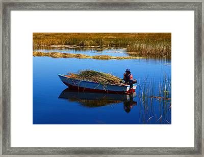 Collecting Reeds Framed Print by FireFlux Studios