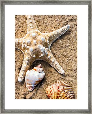 Collecting Shells Framed Print