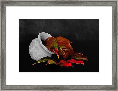 Collecting The Autumn Colors Framed Print
