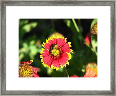 Collecting Too Framed Print by Peggy Burley
