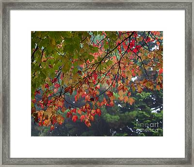 Collection Of Colour In The Morning Fog Framed Print by Maria Janicki