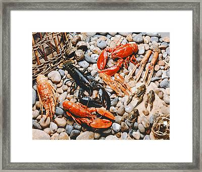 Collection Of Shellfish Framed Print