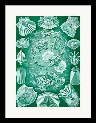 Phycodurus Eques Framed Prints