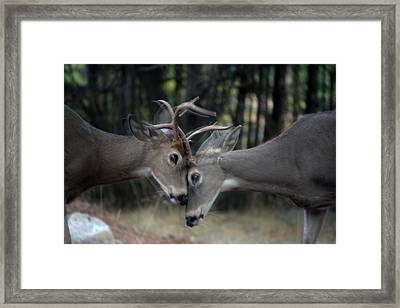 Framed Print featuring the photograph Collide by Rita Kay Adams
