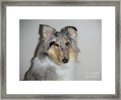 Collie Framed Print by David Grant