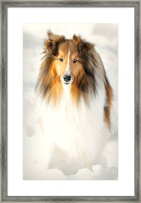 Collie  Framed Print by Diana Angstadt