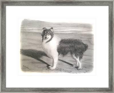 Collie Dog Portrait Framed Print by Edward Pollick