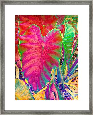 Colocasia Framed Print