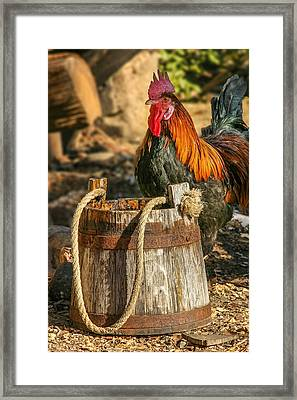 Coloful Rooster 2 Framed Print