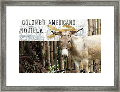 Colombia, Minca Mule And Sign Framed Print by Matt Freedman