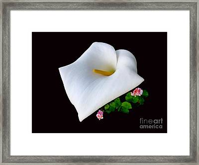Colombian Calla Lily Framed Print