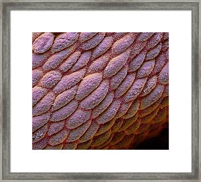 Colon Framed Print by Steve Gschmeissner