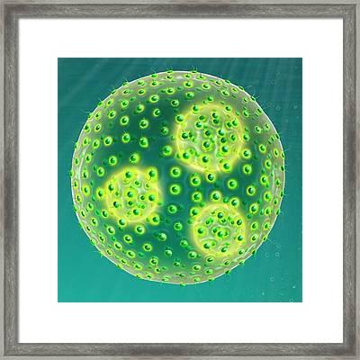 Colonial Green Algae Framed Print by Claus Lunau