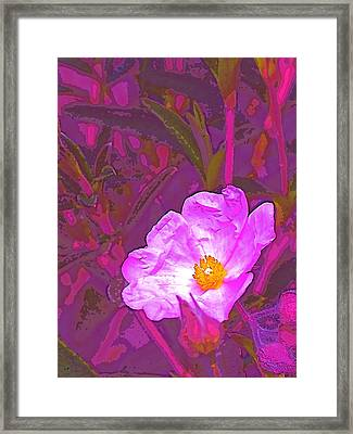 Color 2 Framed Print by Pamela Cooper