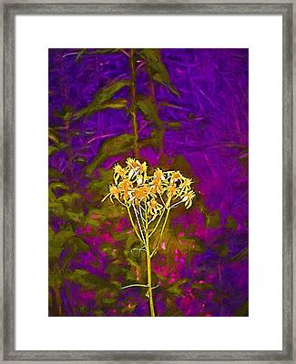 Color 5 Framed Print by Pamela Cooper