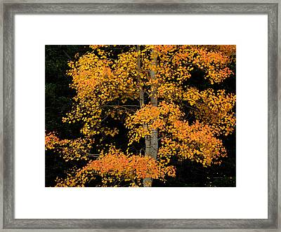 Color And Contrast 2 Framed Print by Leland D Howard