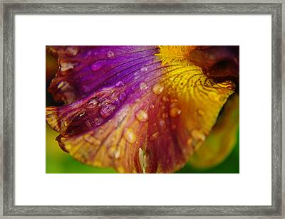 Color And Droplets Framed Print by Jeff Swan