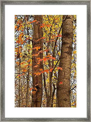 Color And Trees Lan 225 Framed Print