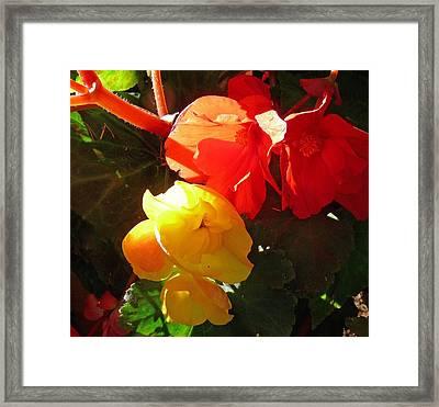 Color Burst Framed Print by Gracia  Molloy