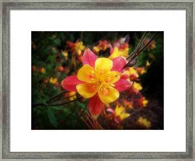 Color Burst Framed Print by Heather L Wright