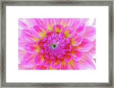 Color Burst Framed Print by Michael Hubley